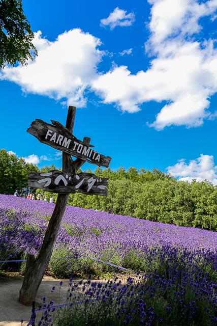 lavender-2015-015