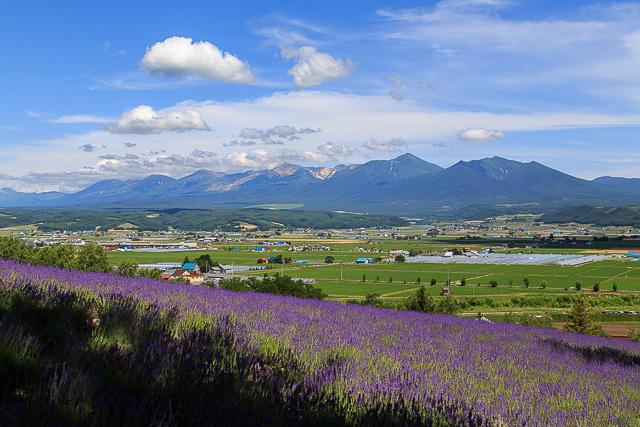 lavender-2015-016