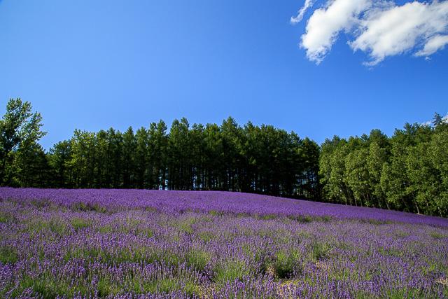 lavender-2015-020
