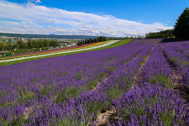 lavender-2015-026