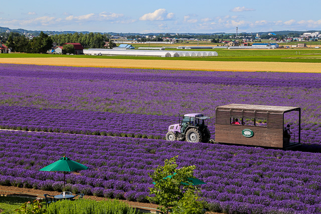 lavender-2015-047