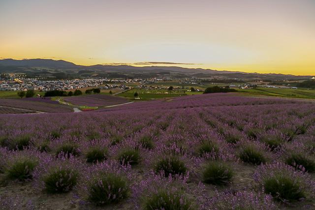 lavender-2015-060