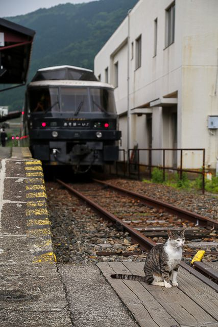 kyushu-train-039