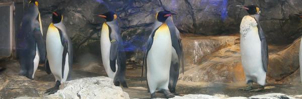 penguin-aqu-000