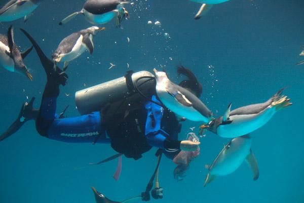 長崎ペンギン水族館のえさやりタイム